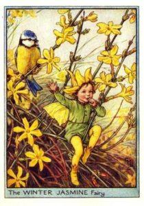 Winter jasmine flower fairy -Cicely Mary Baker